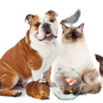 How Getting a Pet Affects Your Finances