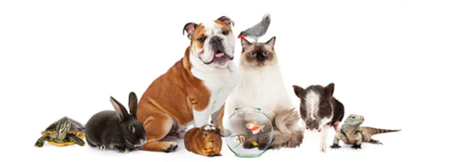 how pets affect your finances